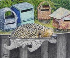 """Janet Matthews Miniatures Artwork Echidna """"Lucky I can swim"""""""
