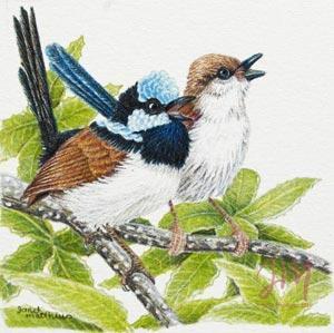 "Janet Matthews Miniatures Artwork Fairy Wrens ""Sing with me"""