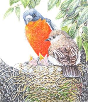"""Janet Matthews Miniatures Artwork Flame Robins """"Yes, they're hungry again"""""""