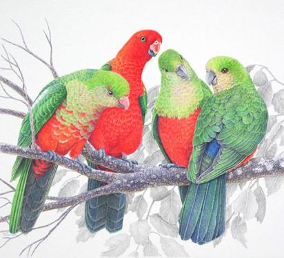 """Janet Matthews wildlife artwork King parrots """"Well, the gossip is…"""""""