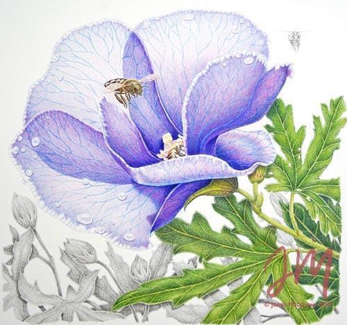 "Janet Matthews botanical artwork Hibiscus (Alyogyne Huegelii) and Bees ""Sharing the nectar"""