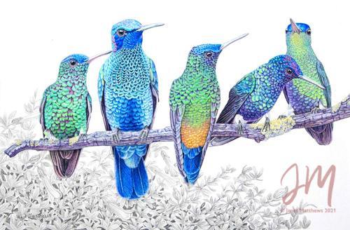 "Janet Matthews wildlife artwork Hummingbirds ""I hear it too"""