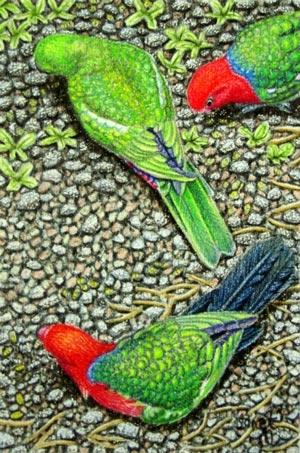 "Janet matthews Miniatures artwork xKing Parrots ""Colourful visitors"""