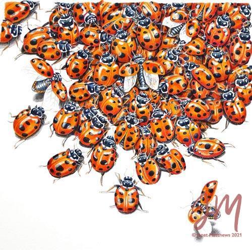 "Janet Matthews Botanical Artwork Ladybugs 13 spotted ""Over Here!"""