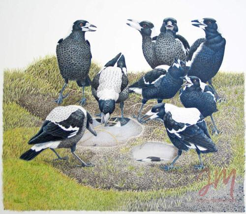 """Janet Matthews wildlife artwork Magpies """"Drop the stIck and sing along"""