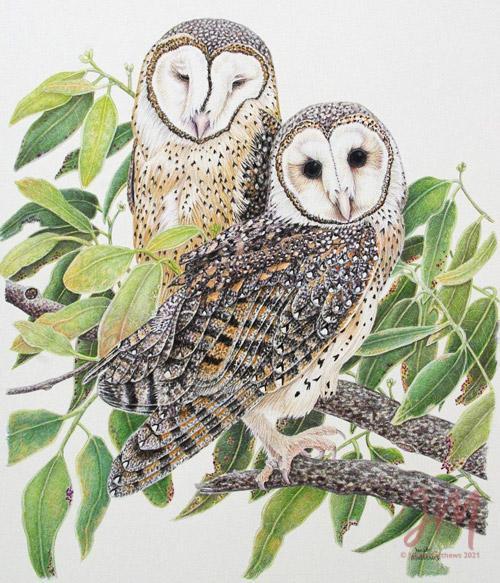 "Janet Matthews Wildlife Artwork Masked Owls ""Shh I'm Sleeping"""