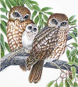 "Janet Matthews Miniatures Artwork Boobook Owl ""Hey Dad"""