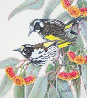 """Janet Matthews miniatures artwork New Holland Honeyeaters """"What do you see"""""""