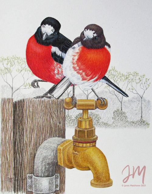 "Janet Matthews wildlife artwork Scarlet Robins ""Want to share"""