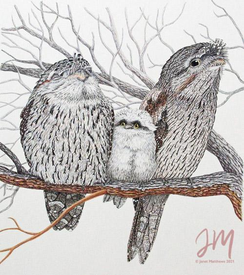 "Janet Matthews wildlife artwork Tawny Frogmouths ""Psst Mum"""