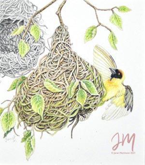 """Janet Matthews miniatures artwork Weaver Bird """"A new nest done"""""""