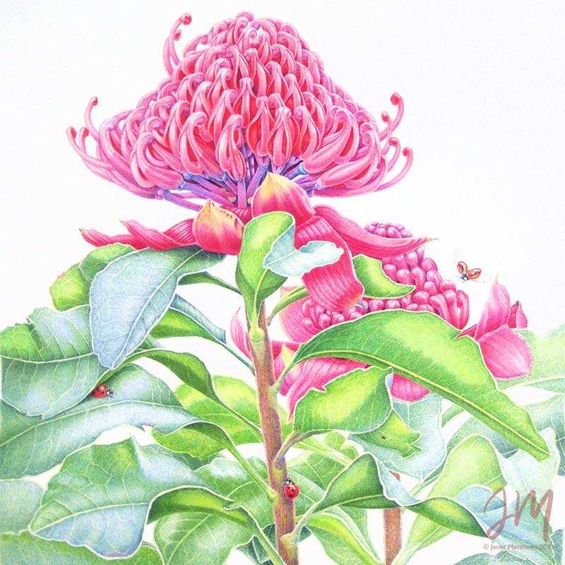 gallery botanical artist