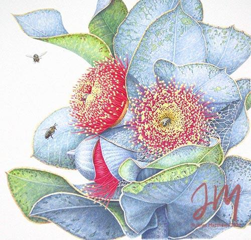 Janet Matthews botanical artwork Eucalypt macrocarpa and bees