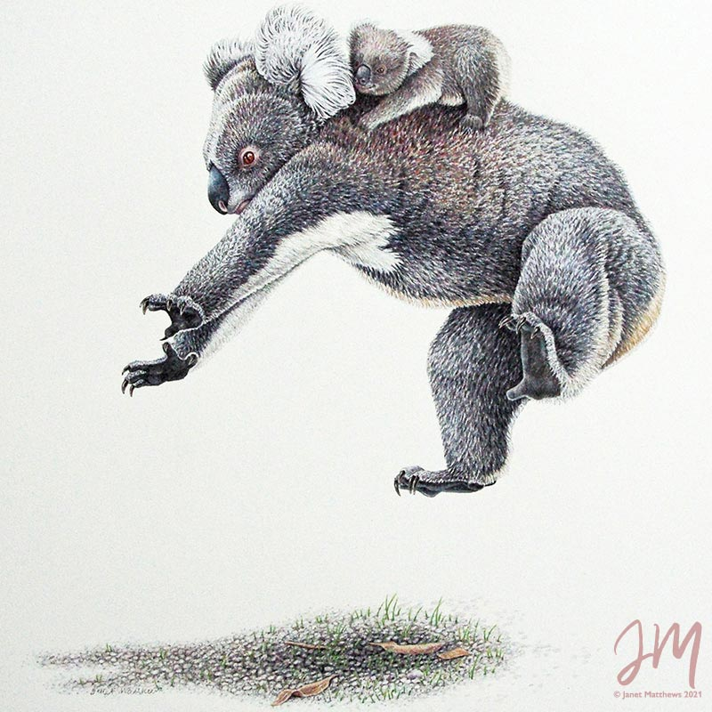 gallery wildlife artist