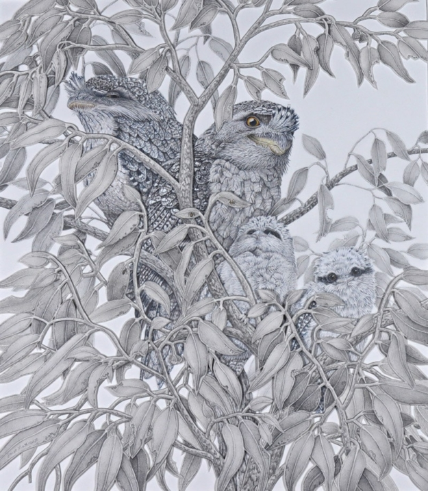 """""""What's out there Mum?""""-Tawny frogmouths graphite pencil artwork artist"""